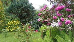 Rododendrony na zahradě